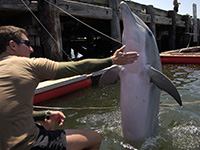 100608-N-4178C-002 LITTLE CREEK, Va. (June 8, 2010) Navy Diver 2nd Class Michael Gerstel, a handler assigned to Marine Mammal Company of Explosive Ordnance Disposal Mobile Unit (EODMU) 1, rewards a bottlenose dolphin after a successful training evolution at Joint Expeditionary Base Little Creek-Fort Story during Frontier Sentinel 2010. An estimated 2,500 Canadian and U.S. military personnel and government civilian agencies are participating in the annual training exercise. (U.S. Navy photo by Mass Communication Specialist 1st Class Bruce Cummins/Released)