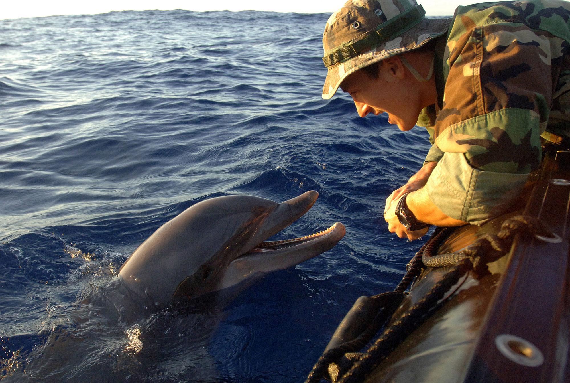 картинки боевых дельфинов пони дружба